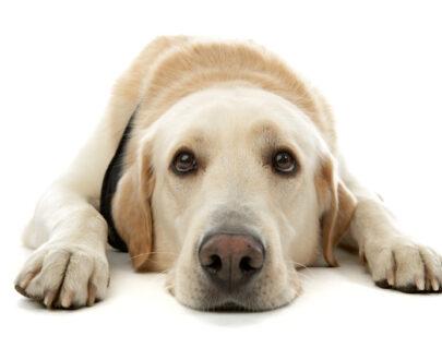 Crocchette per Cani Mantenimento