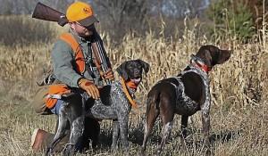 mangime per cani da caccia