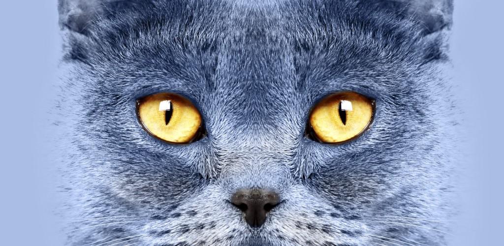 crocchette professionali per gatti