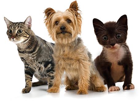 Mangime per canili e gattili