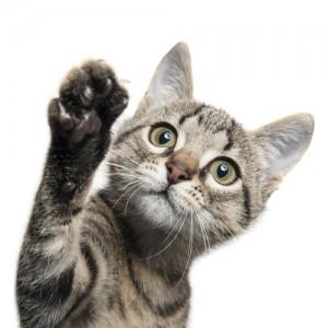 croccantini per gattili